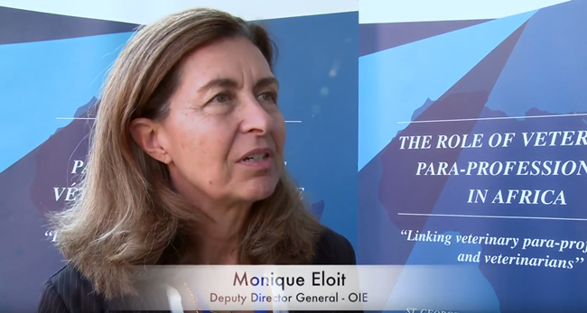 Interview with Deputy Director General of OIE discusses ...
