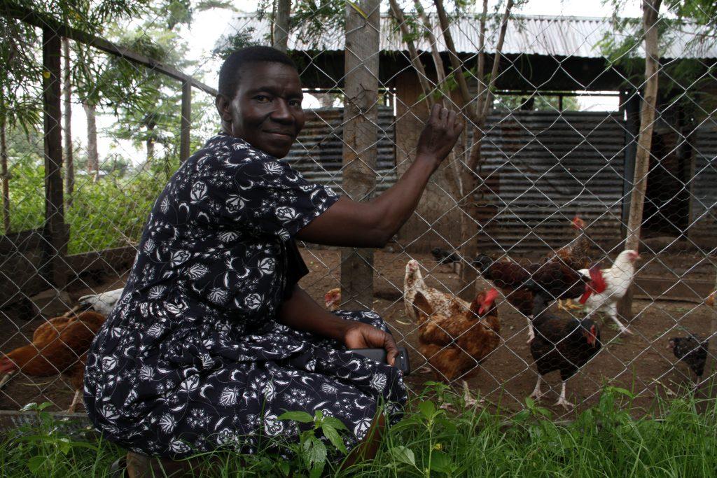 Vaccines boost backyard poultry rearing in western Kenya
