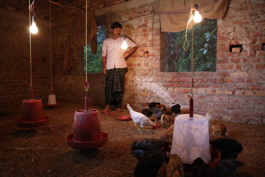 Chicken vaccine broadening economic avenues in Jharkhand