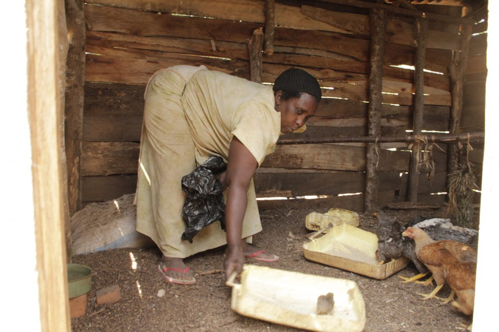 For women in rural Uganda Newcastle Disease vaccine is more than